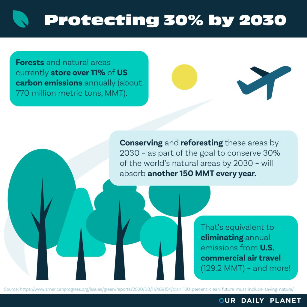 #Democrats will protect wildlife habitats and biodiversity, slow extinction rates, and grow America's natural carbon sinks by conserving 30 percent of our lands and waters by 2030. 19/22 #DemPartyPlatform  #ProtectWildlife  #biodiversity