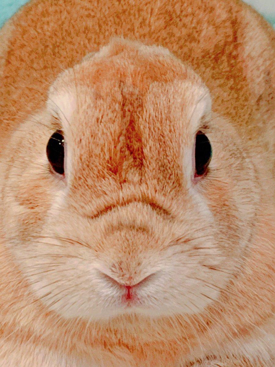 「新種の生物発見!!。。。か!?」の巻き!  ばくだん姫はようすをみている。。。  誰も #ウサギ だなんて思うまい。  #うさぎ #うさぎのいる暮らし #うさぎのいる生活 #うさぎ日記 #うさぎ好きさんと繋がりたい #ふわもこ部 #ふわもこ #きょうのうさぎさん https://t.co/L1v1TVcil2
