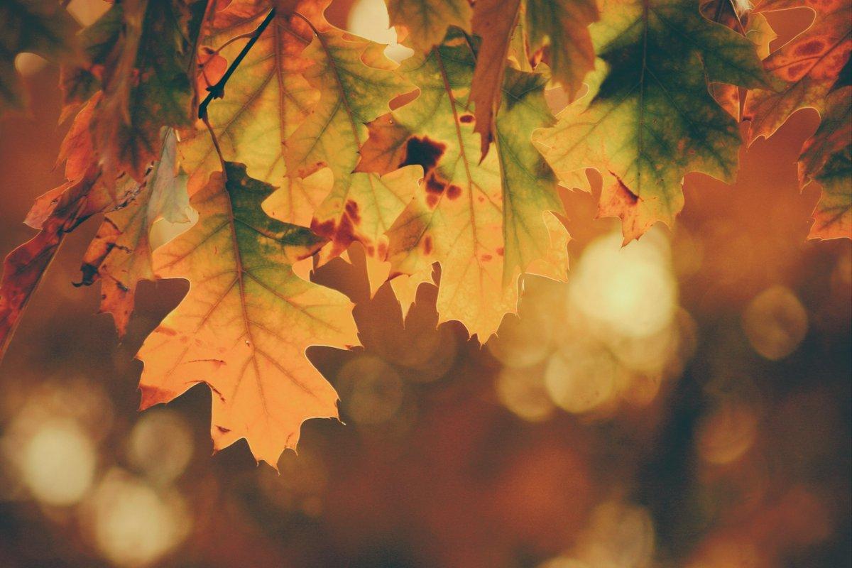 🍂秋は疲れを癒すベストタイミング!🍂・ミイラ化の季節?!乾燥にご注意・実りの季節を堪能!秋の薬膳・秋に食べたい食材たちお疲れ気味の方にぜひ読んでいただきたい薬膳ポイントを薬膳アドバイザー安藤さん@honamin1011が解説!旬の味覚でおいしい薬膳を👇