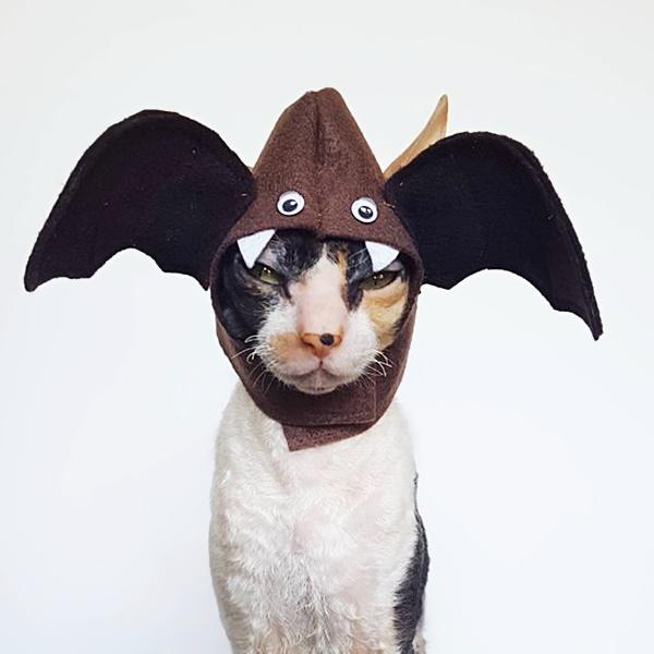 #HalloweenIsComing #HappyHalloween #Halloween #SpookySeason #TrickOrTreat #HalloweenCostume #HalloweenFun #Cat #Cats #CatsInCostumes #Bat - Photo by Ticketybootique https://t.co/RkiffFCSue