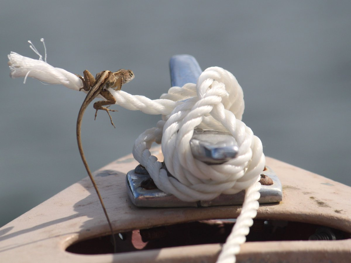 """I love all of the creatures who live on my shores and in my waters. Even the """"knotty"""" ones… #IRL #onelagoon #sailing Photo Credit: S. Jansson https://t.co/poTQDi4UDj"""