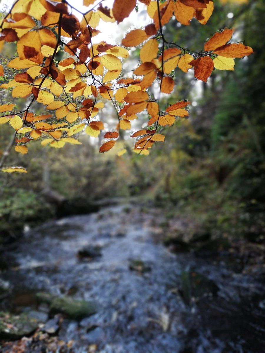 Beautiful autumn walk 🍂Lucky we noticed the hitchhiker! 🐛 @BBCSpringwatch #Autumnwatch