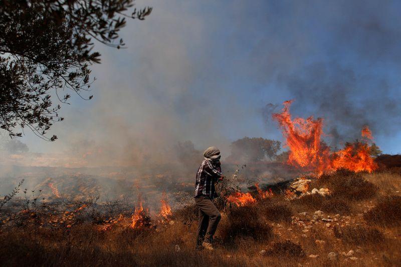 West Bank Palestinians' olive trees burn as U.N. urges protection for harvest
