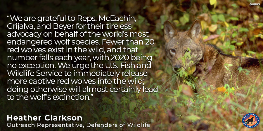 ICYMI: @RepMcEachin is leading lawmakers in urging the @USFWS to take action to protect the critically endangered American #RedWolf. USFWS must step up & take action as mandated by the #EndangeredSpeciesAct to preserve this species! Read: https://t.co/LqUzpPN7YL #StopExtinction https://t.co/yr5T13WvIT