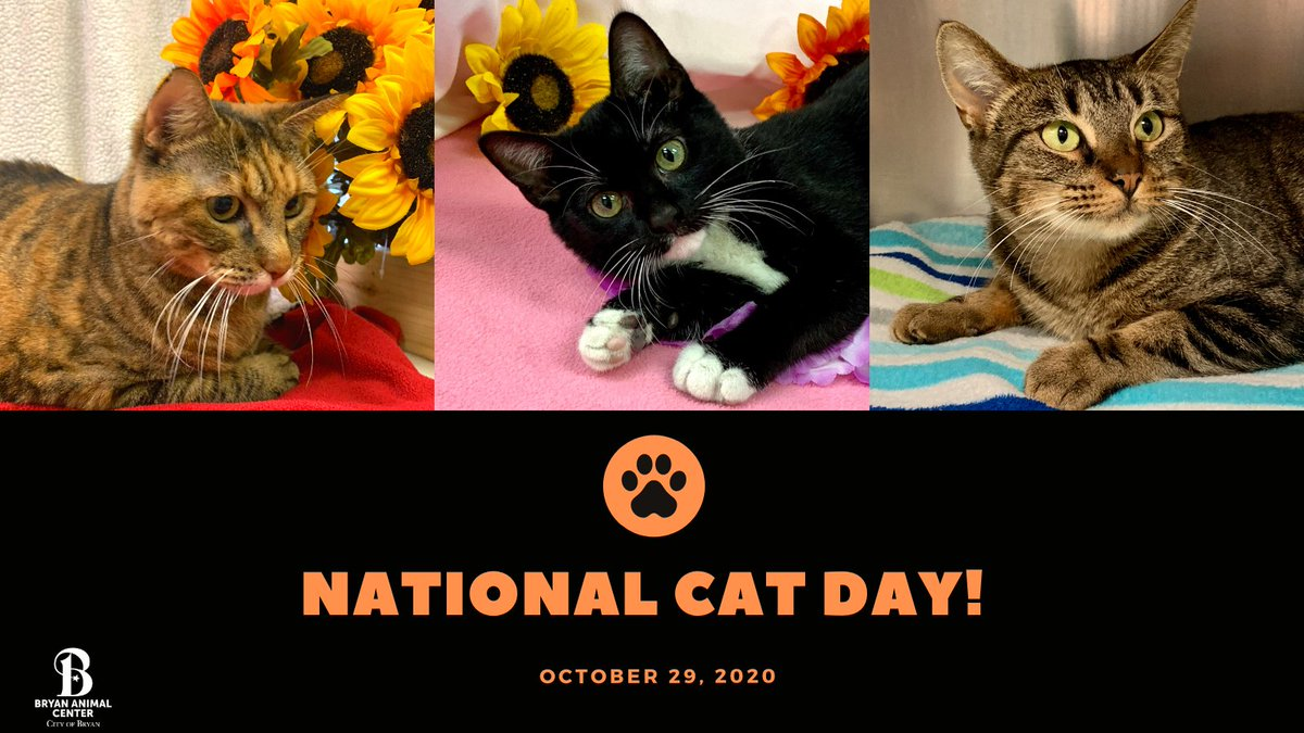 Happy National Cat Day!  Remember ALL adoption fees have been waived until October 31st! You can view all of our adoptable animals at . #NationalCatDay #Adopt #Cats #BryanAnimalCenter #CityofBryan #Rescue #CatCuddles #Adoptionfeeswaived