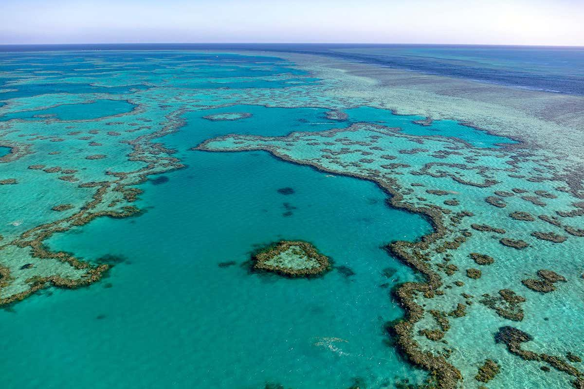 Biobank to house 800 coral species so we can restore reefs in future bit.ly/37TRJYT
