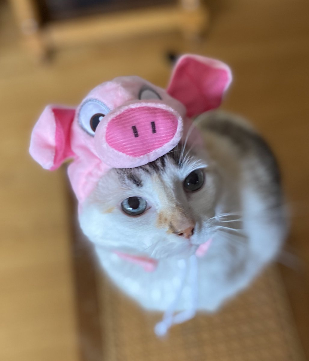 Pincy's #Halloween joke of the day: What do pigs dress up as on Halloween? Frankenswine. https://t.co/ABU2GR4o3Z