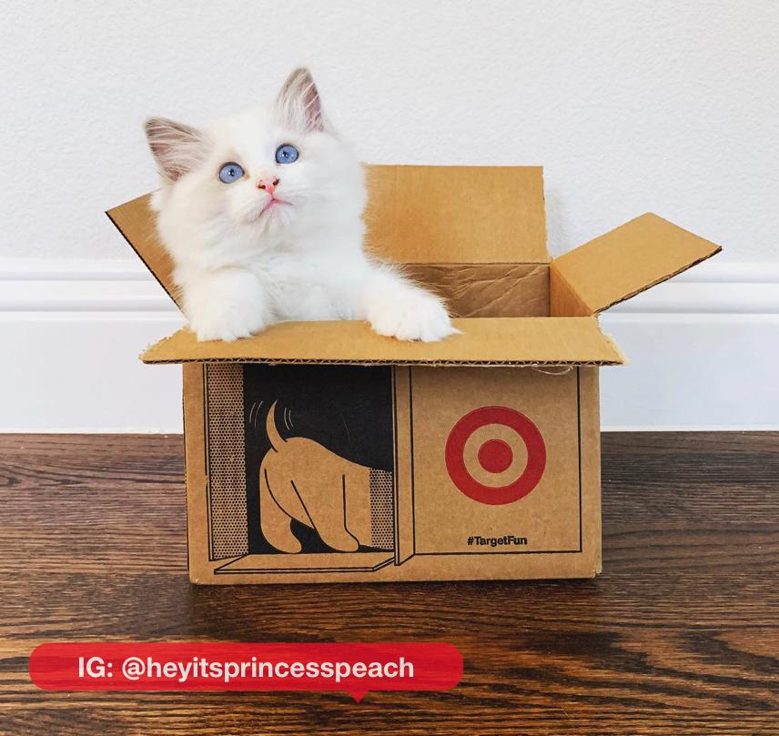 The cat's out of the box #NationalCatDay