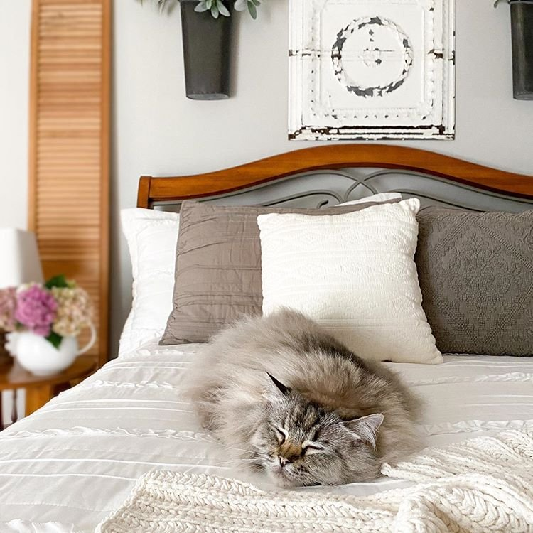A power nap seems like the puurrrfect way to celebrate #NationalCatDay. 😻 Thanks for sharing your floofy #SWColorLove, Jen! 📸: @midwest_style 🎨: Repose Gray SW 7015 #sherwinwilliams #catnap #inspiration #diy #paint #interiordesign https://t.co/JBv9NyIHZX
