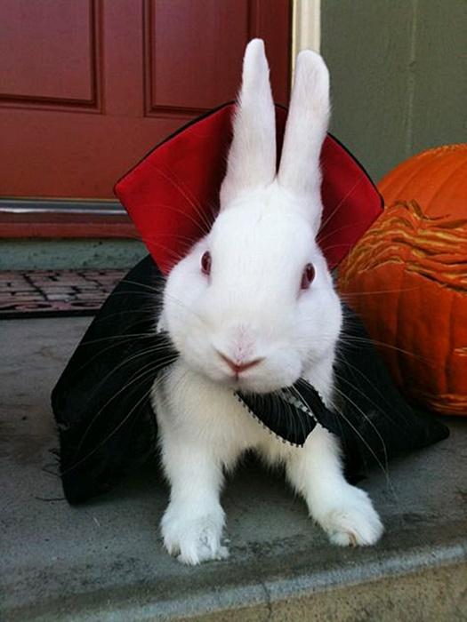 #HalloweenIsComing #HappyHalloween #Halloween #SpookySeason #TrickOrTreat #HalloweenCostume #HalloweenFun #Animal #Animals #AnimalsInCostumes #Albino #Bunny #Rabbit #Vampire https://t.co/R4MXJQDEMT
