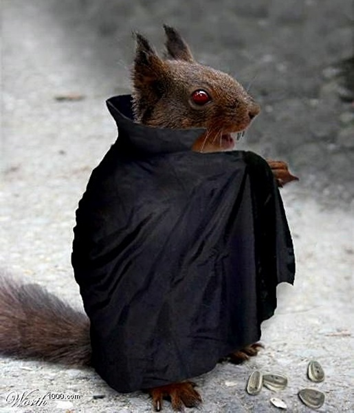 #HalloweenIsComing #HappyHalloween #Halloween #SpookySeason #TrickOrTreat #HalloweenCostume #HalloweenFun #Animal #Animals #AnimalsInCostumes #Squirrel #Vampire https://t.co/eJYJtaJvfG