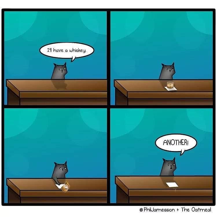 I'm late to the party, but... Happy National Cat Day! 😸😽 . #Happy #NationalCatDay #cats #happynationalcatday #CatsOfTwitter #cat #kitty #kittykitty #kitten #pspsps #nationalcatday🐱 #whisky #bar #InstaCats #TwitterCats #whiskey https://t.co/Xo8qyeAZqU