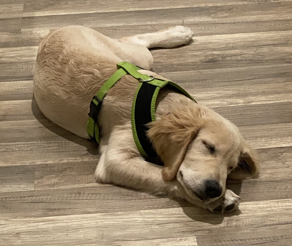 Good night 💤 everyone. I'm so tired for the day. I had been out for an hour and played a lot. Wish you enjoy your night Love from Simon  #Goodnight #goodmorning #puppy #dogsoftwitter #dogs #dog #love #sleep #SleepyJoe #Instagram #YouTuber #YouTube #funny #FUNKY #joy #happiness https://t.co/hsOdIFERWj