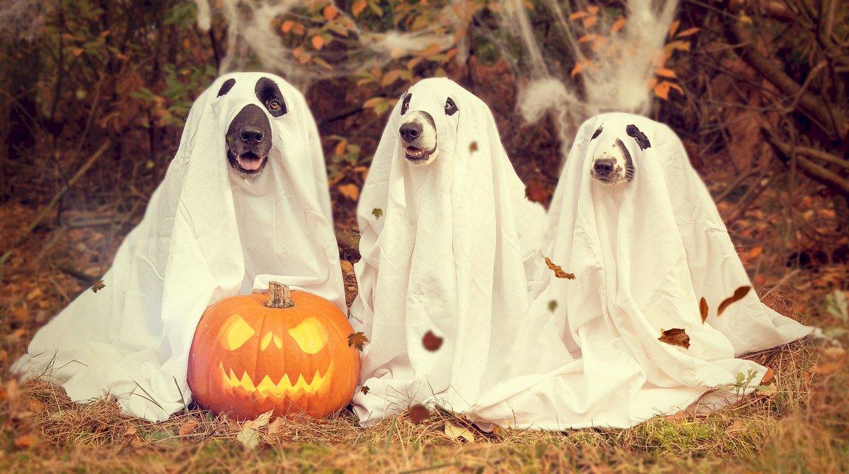 Upiornego Halloween! 🎃👻🧟♂ #czesanie #poland #strzyżenie #dog #instadog #pieseł #pielegnacja #polishdog https://t.co/KeKt2LKTQn