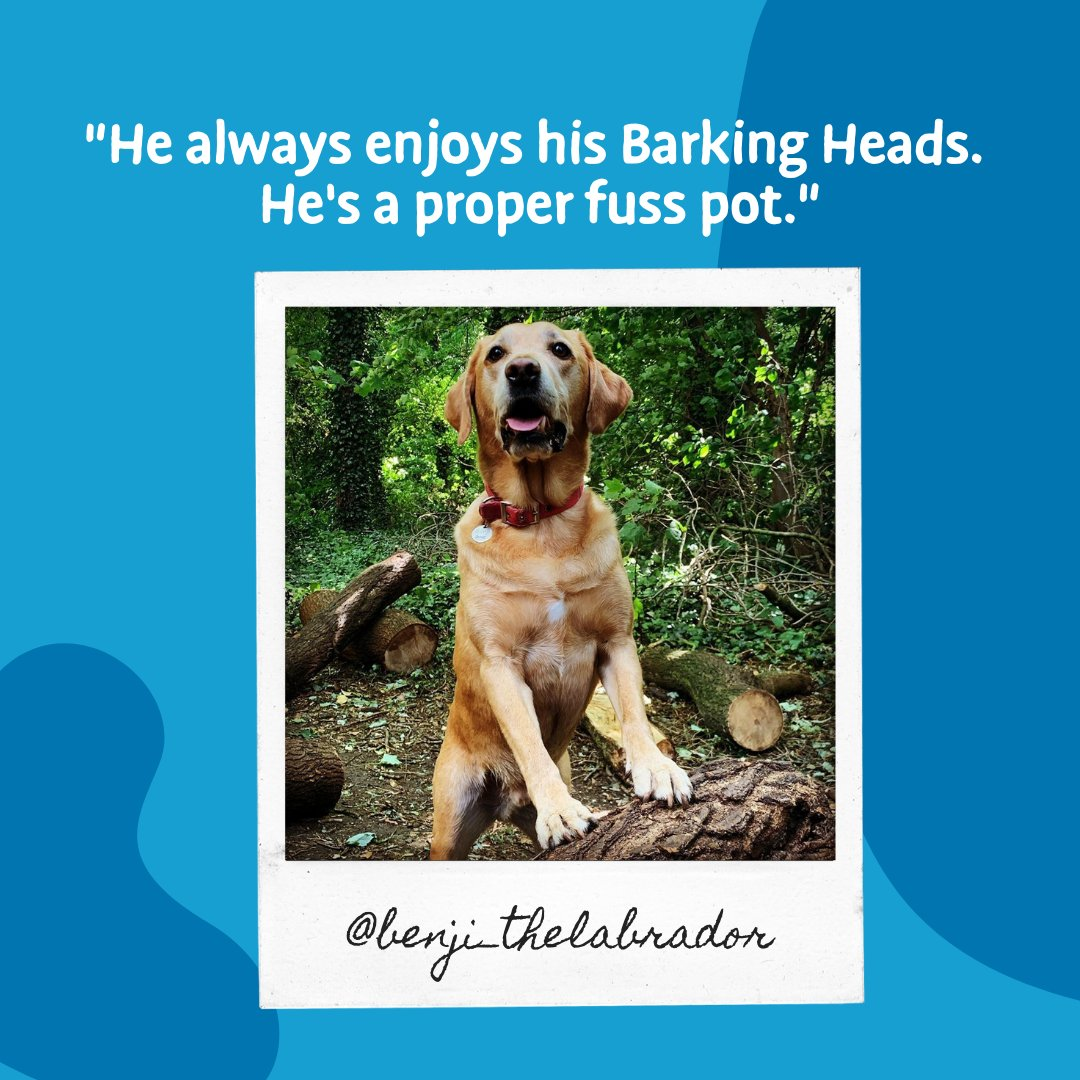 Did we ever tell you how happy we get when we read a good review? Every appreciative wag of a tail makes our day!️🙂 IG: 📷@Benji_thelabrador https://t.co/1pfduiqahZ #BarkingHeads #DogFood #HealthyDogFood #DogFoodReview #DogLovers #Labrador https://t.co/xFTSwatEeB