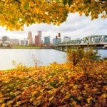 Image for the Tweet beginning: There's something special about Portland
