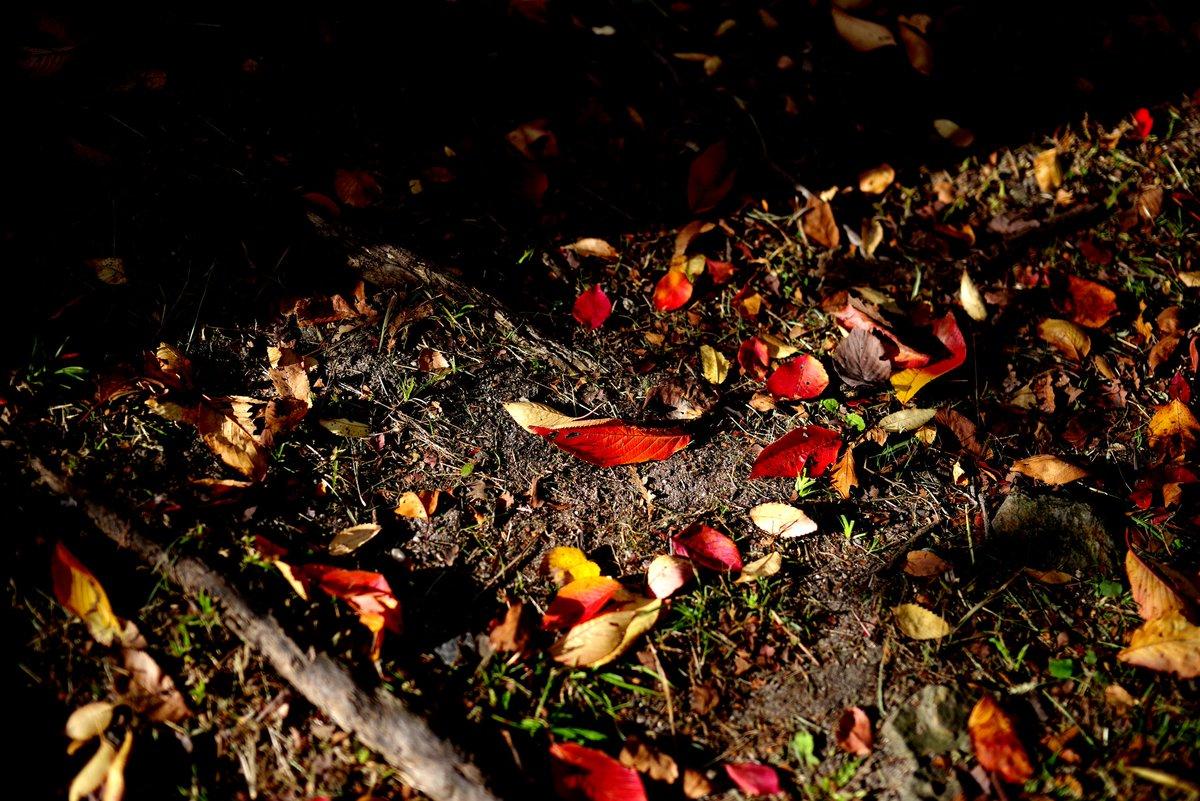 公園で 秋を探して いや、探さんでも秋やけども  #ペンタックス #PENTAX #PENTAXIAN https://t.co/9q5UUcpRor