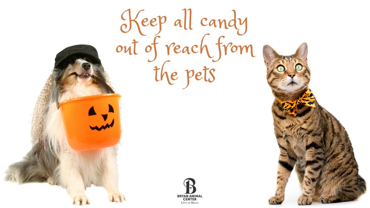 Be sure to keep your pets safe this Halloween. Remember to keep all Halloween candy out of reach of all pets. #PetSafety #Halloween #Trickortreat #Dogs #Cats #BryanAnimalCenter #CityofBryan #Candy