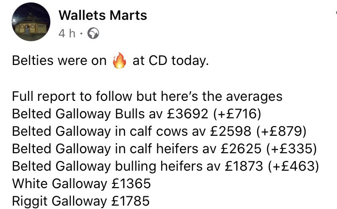 Belted Galloway's in big demand today 👍