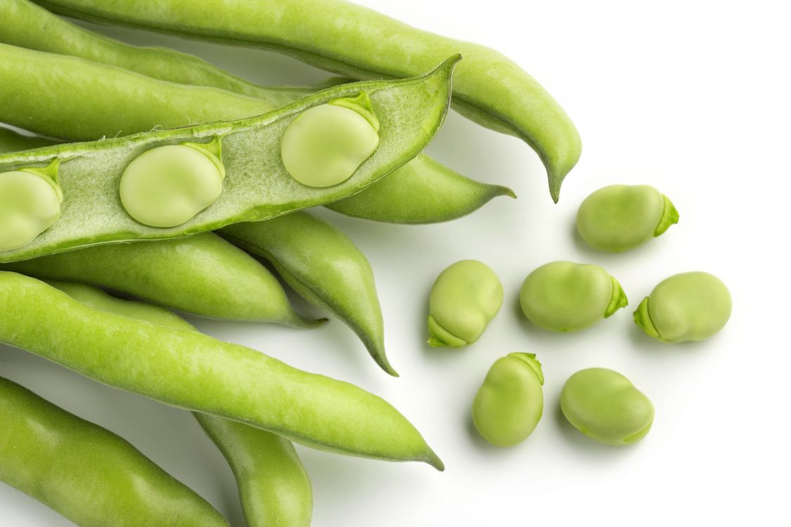 Fun Fact! Fava beans are rich in the amino acid L-DOPA; the precursor to the neurotransmitters dopamine, norepinephrine, and epinephrine. https://t.co/EAbmcnTZlU #brain #health #nutrition #funfact #fridayfunfact #aminoacid #nutritionaloutlook https://t.co/xBC442hFwT