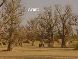 Au lieu de protéger et préserver nos baobabs centenaire de la ville de Mirriah qui représentent un patrimoine historique dans la diversité de notre écosystème naturel. Ces derniers sont abattus au détriment d'un ouvrage qui aurait pu être delocaliser à d'autres endroits. https://t.co/pOZuFp2QFM