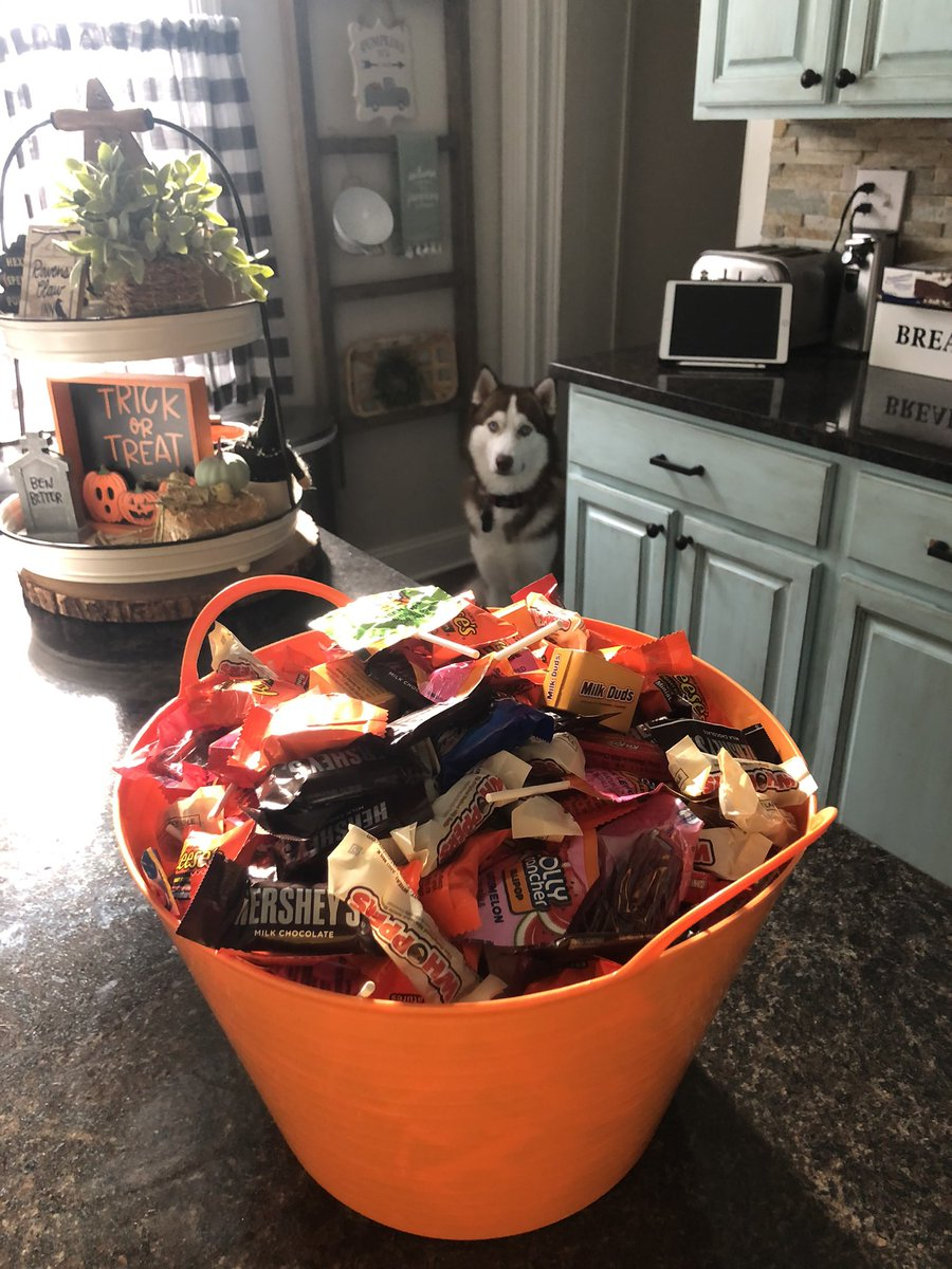 Got our candy ready, we will be spending this Halloween at home safe and sound 🎃👻 Won't be trick or treating or giving out candy this year, it sucks but we need to help stop this virus from spreading 😷 (Bucky's lurking) 😆 #SocialDistancing #siberianhusky https://t.co/ysIT6PPOTT
