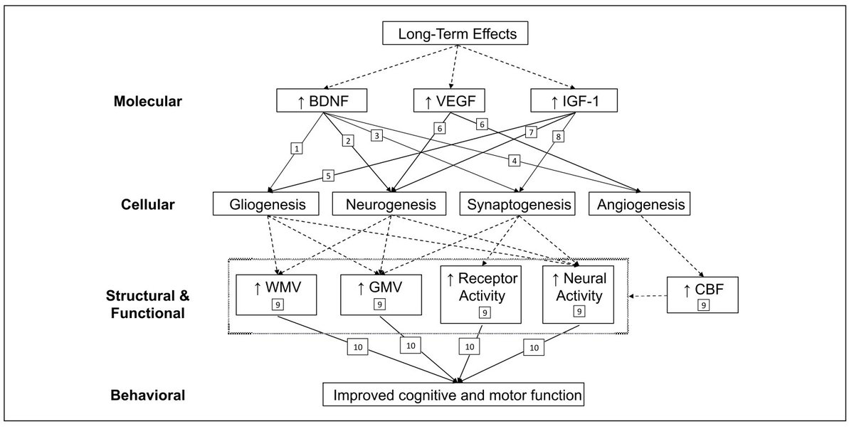 Exercise-Induced Neuroplasticity: A Mechanistic Model and Prospects for Promoting Plasticity  🏃‍♀️-> 🧠  Jenin El-Sayes et al. Neuroscientist #openaccess  https://t.co/iFBI5BP2nT https://t.co/kJKQDxnuP3