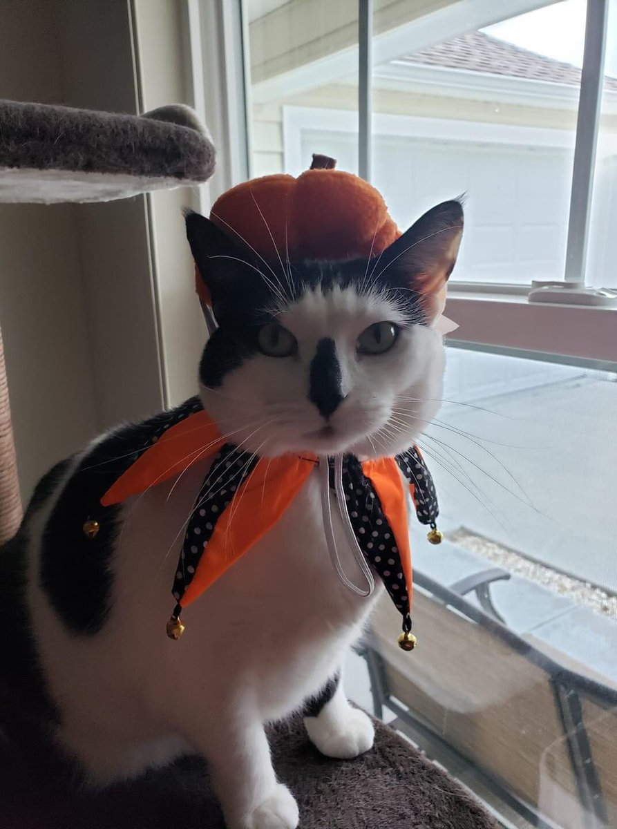 @alexs_journey She sure is a beauty!. This is a picture of my Cat Miss Lucy, getting ready for Halloween. Hope you have a great weekend Alex. And you are AWESOME! https://t.co/TyQbrbg4bu