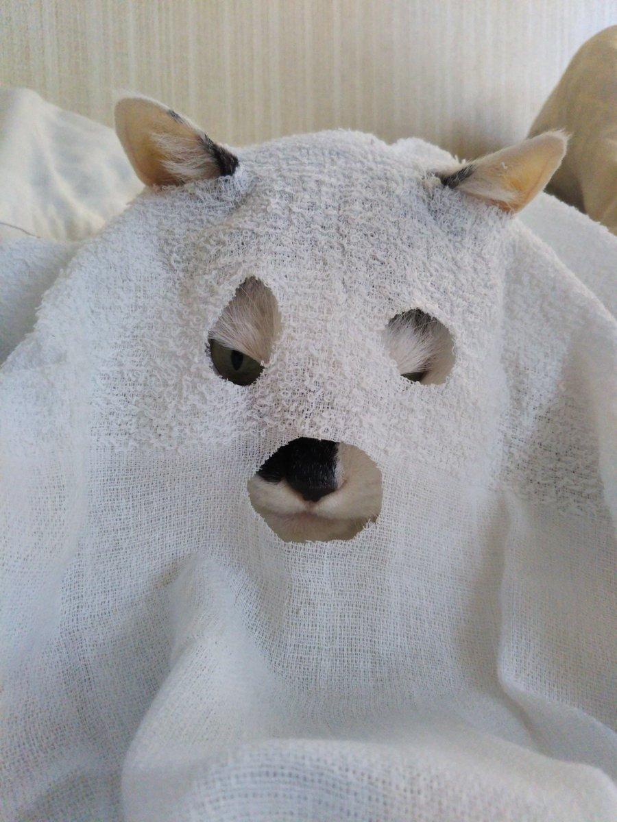 今年も地味ハロウィンは面白いねえ。画像はあきらかに準備不足だった去年のうちのねこの仮装。