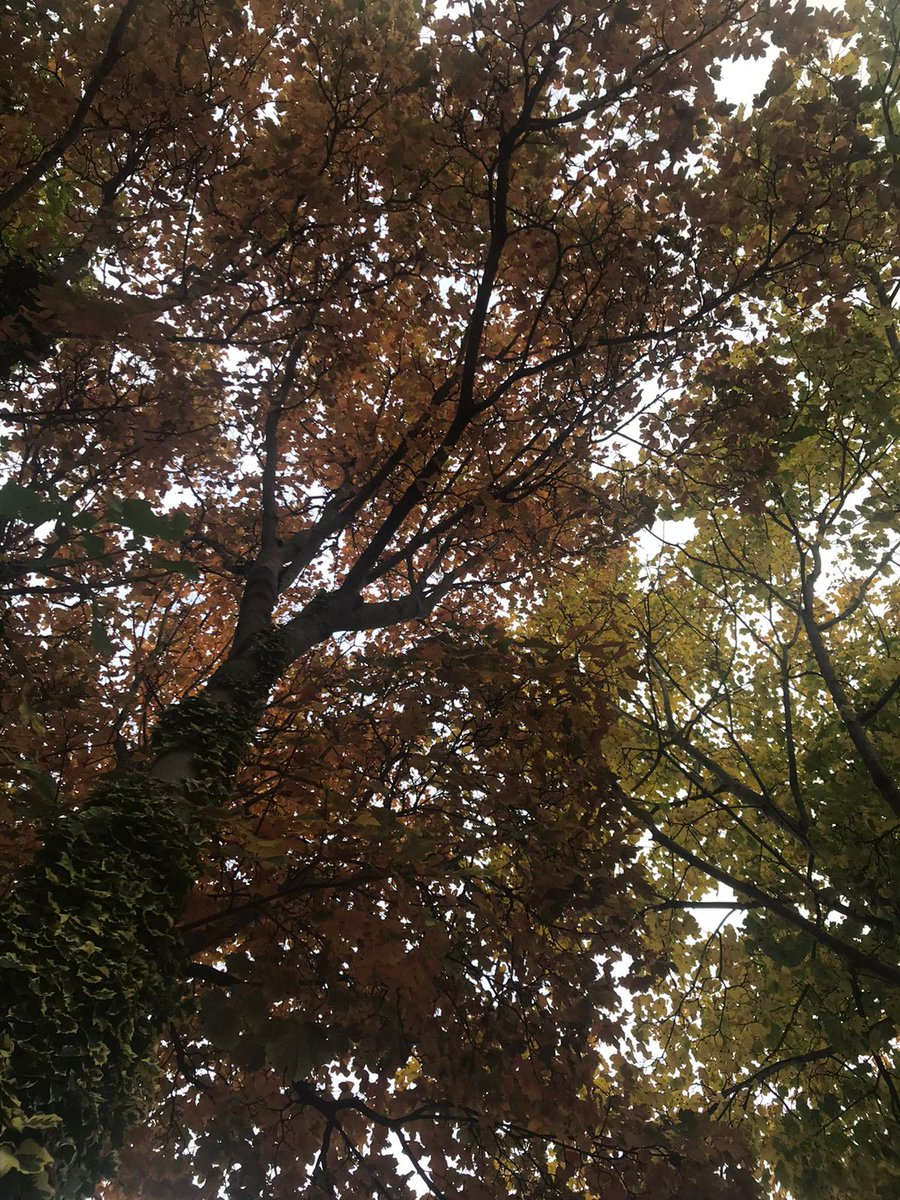 #autumn #fall #otoño #trees https://t.co/BwhJi52TVa