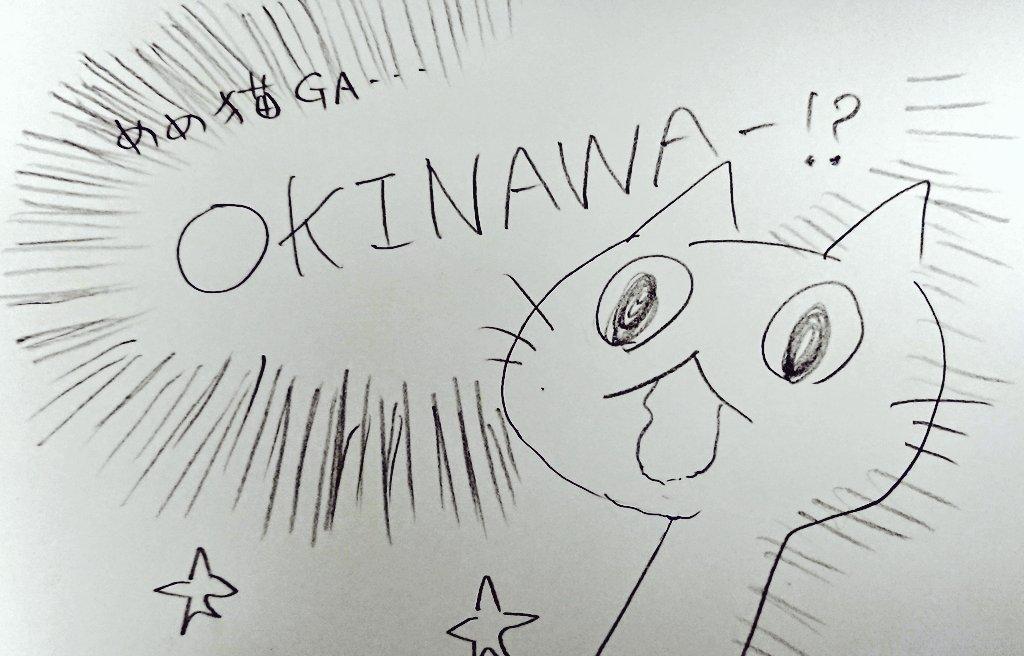 【⚠️重大告知⚠️】にゃんと!めめ猫、沖縄トラベリー企画が始動\(^o^)/✨最初で最後?!🥺✨misuさんアテンドによる撮影三昧の2日間です📸日時:2021年3月6日~7日【⚠️予約開始→来週月曜11/2 22時から】トラベリーHPにて→ぜひ、ご検討お願いいたします🙇♀️💕