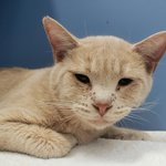 Image for the Tweet beginning: #Cat #Aslan_CCSTCA_07 Although I woke