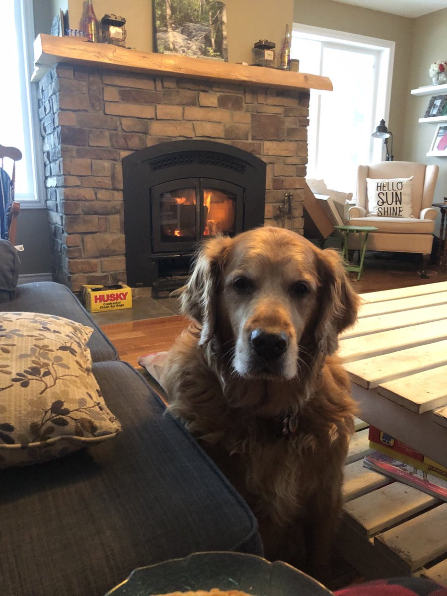 Cozy Saturday #dogsofinstagram #dog #goldenlove #puppy #instadog #doglovers2020 #retrieverspage #dogoftheday #pets #doglovers #love #doglife #puppies #pet #cute #puppiesofinstagram #doggo #ilovemydog #petsofinstagram #animals #dogslife #grc #dogsoftwitter #dogsarelove https://t.co/Usjcjw94rw