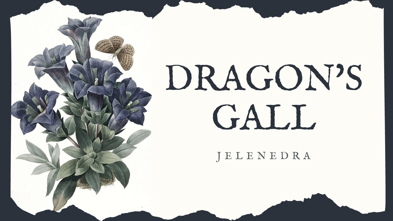 A banner showing an image of blue gentian flowers with a speckled brown moth flying among them, showing the title Dragon's Gall and the author's name Jelenedra on a pale cream coloured background. The banner was made by AO3 user ladyofrosefire.