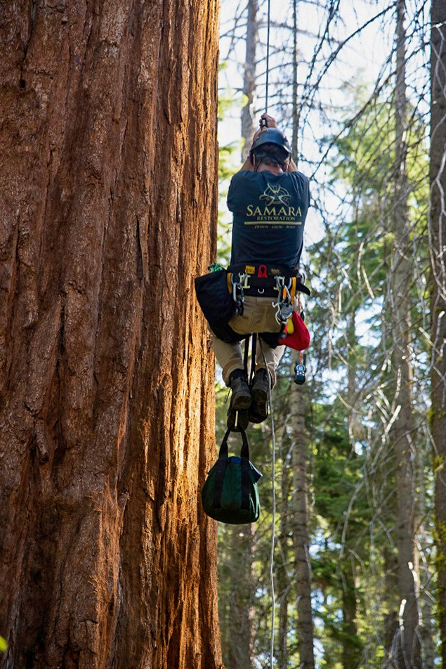 Where does a tree get its water?  This question lies at the heart of a new study seeking to understand what's behind the death of several sequoias in the Mariposa Grove at least 30 at @SequoiaKingsNPS. Get the whole story: https://t.co/s3fUgpDS5l https://t.co/wtPgfqBmqo