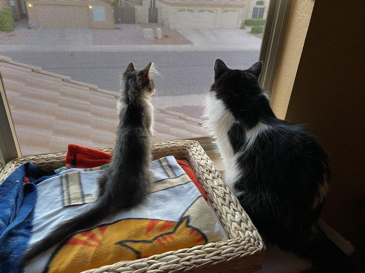 Arizona Humane Society Azhumane Twitter