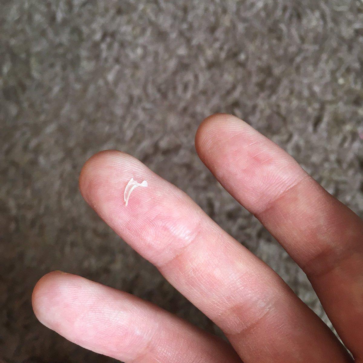 掃除してたら猫の爪、発見。前、歯が落ちてたこともあったなあ。