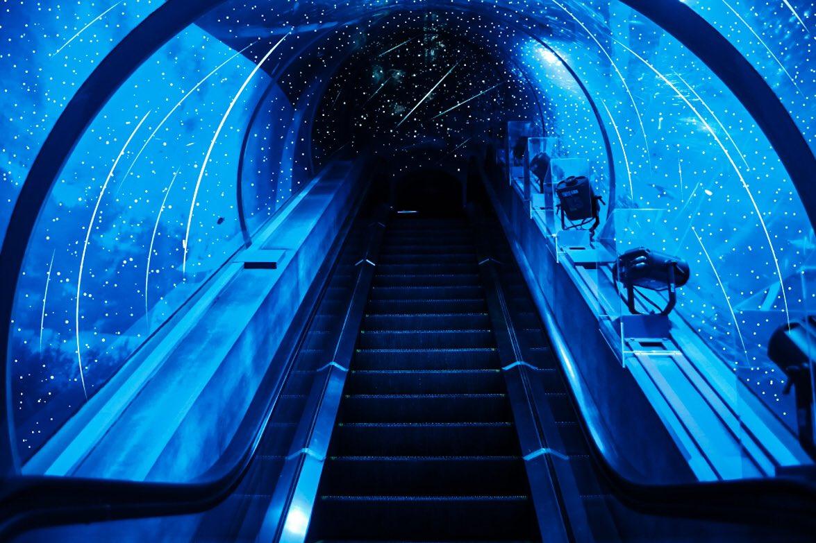 一個可以觀察星空和星座的水族館。 Em3A3QkVgAEKBgw