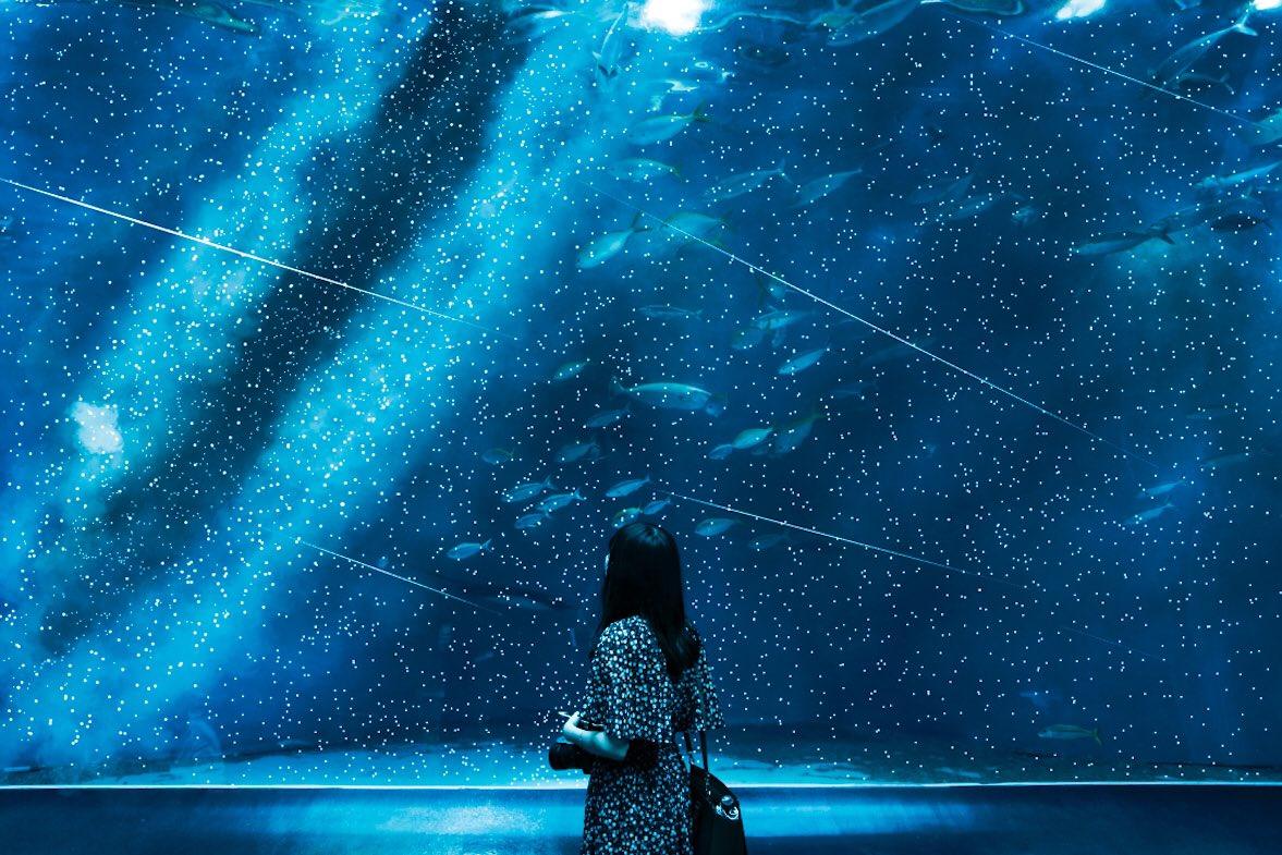 一個可以觀察星空和星座的水族館。 Em3A3QmVEAABl5z