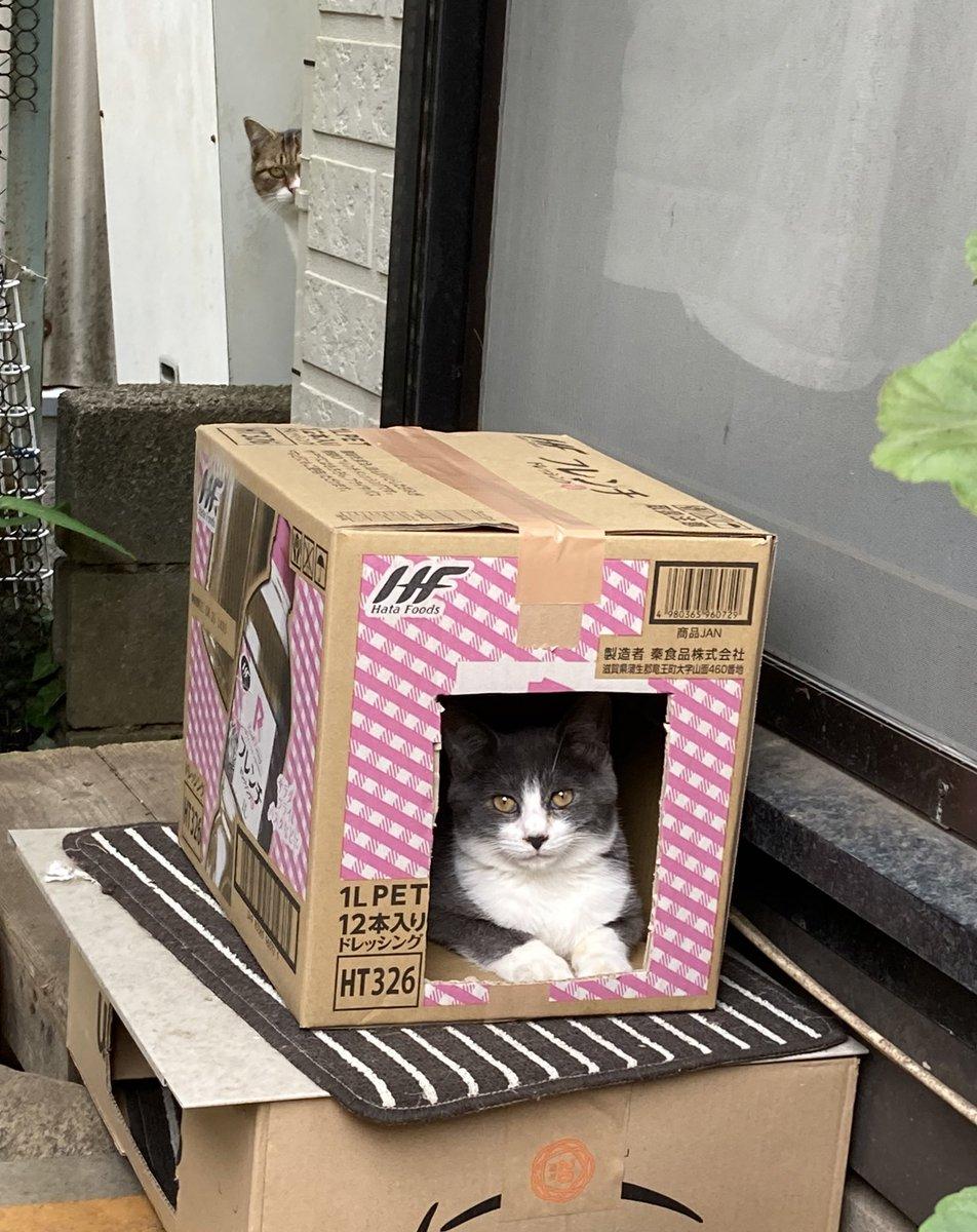 先日、ウチの母上殿が作った段ボールハウスに猫が入ってたので写真を撮ったのだけど、改めて見直してみたら後ろに…