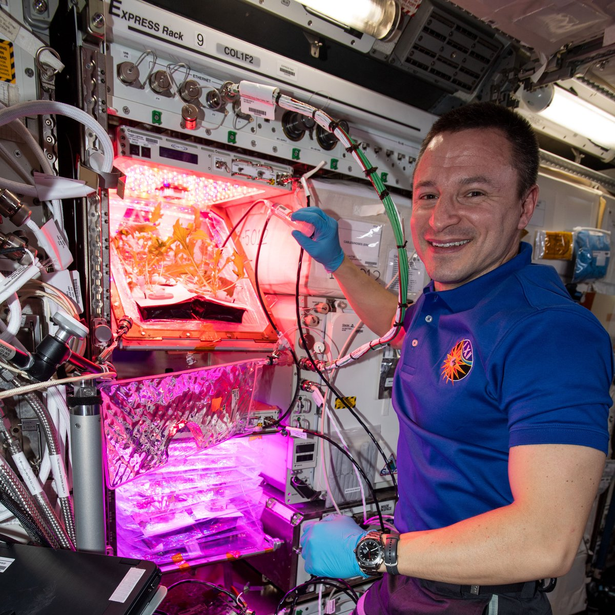 How do you grow plants in space? NASA's Human Research Program studies how growing plants in space will be an important part of an astronaut's job for food sustainability & nutrition on deep space missions: https://t.co/WH1JlB85Dm https://t.co/yH02tMLIVI