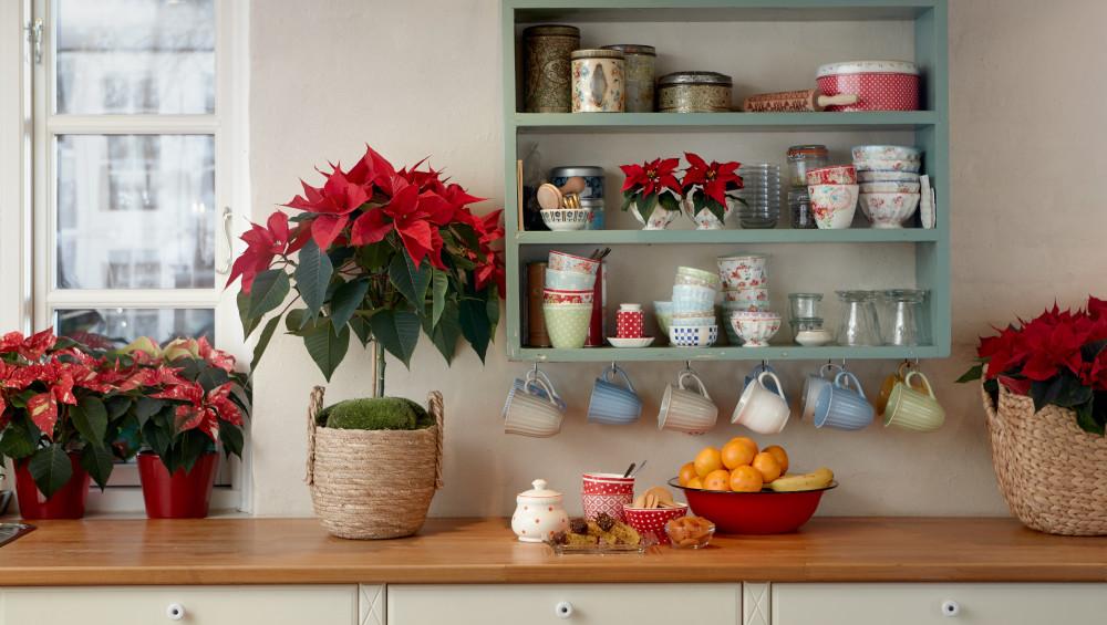 Fira en annorlunda jul med traditionella blommor https://t.co/6WCCbvpTwu https://t.co/zSeOCOL3eh