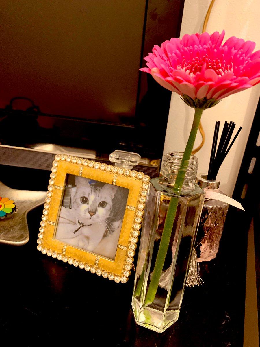 夢に出てきたのも気になって、お参り行って、遺品整理でもないけど、ちょと捨てれなかったものとか片付けて、写真もやっと飾れて、スッキリした(´ . .̫ . `)もうすぐ1年経つのか( •́ .̫ •̀ )久しぶりにお花も飾っとこーね^._.^♥