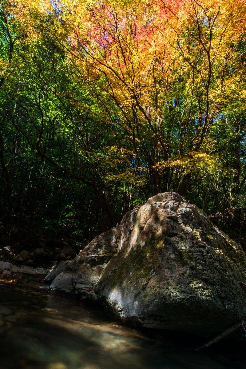 流れる 川 音 の 川の流れはバイオリンの音