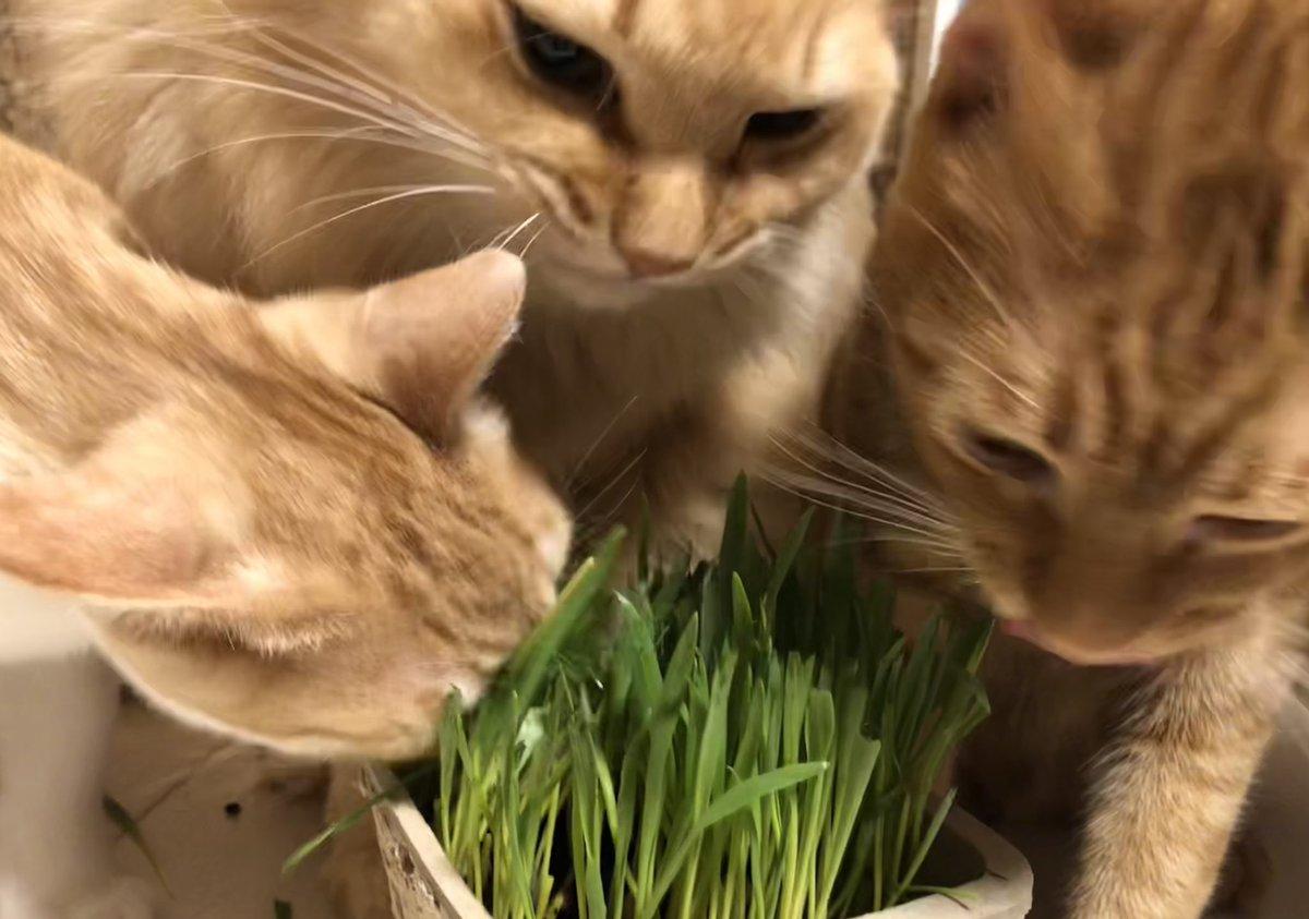 食べ 過ぎ 子猫