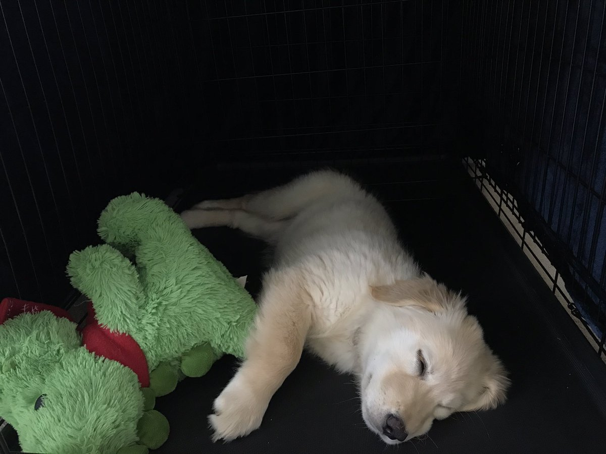 Theia - Ghost hunting is hard work.. she went into her crate (all by herself) and is now taking a snooze 💤