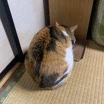 猫のこの角度が好きな方は挙手してくださいっ!丸まってる背中が可愛い…