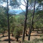 Image for the Tweet beginning: 🌳🏔️Sovint quan pensem en #boscos