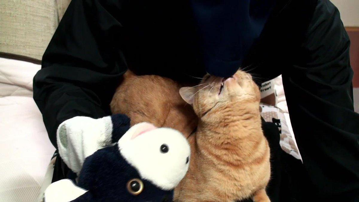 そこ入ったらダメ。  #猫 #ねこ #パペットマペット #亜空間
