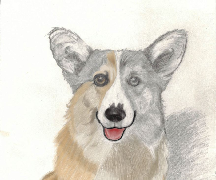 Just working on the corgi artwork little bit more. Still working on the corgi's face.  #corgi #corgipainted #animal #animalpainted  #dog #dogpainted #paint #doglover #puppycorgi #art #artwork #artist #corgiartwork #corgilove #artisttofollow #dogartwork